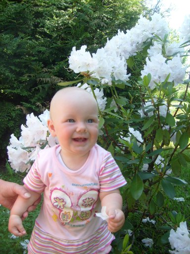 U sąsiadki rosną białe kwiatki. - 66kB
