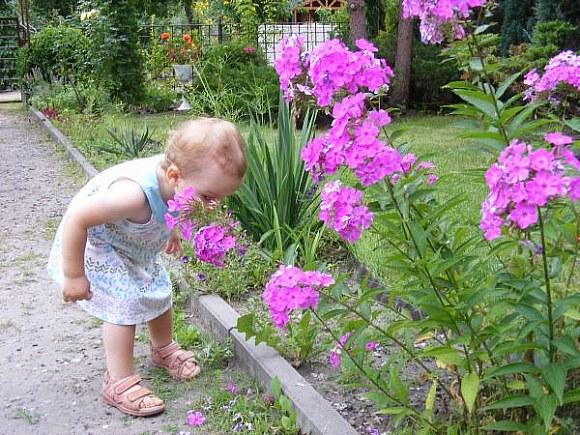 Wąchamy kwiatki