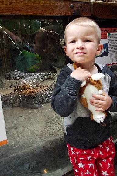 brrr krokodyle