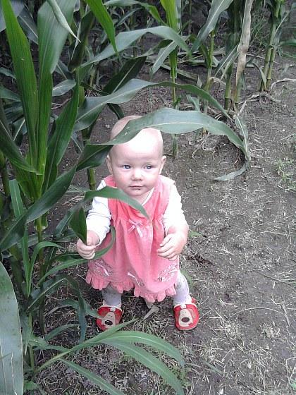 Buszuję w polu kukurydzy.
