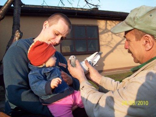 Dziadek pokazuje mi jednego ze swoich gołębi.